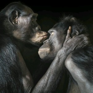 bonobó-gyengédség